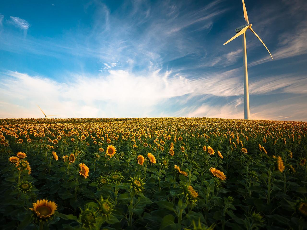 8 feiten en weetjes over windmolens